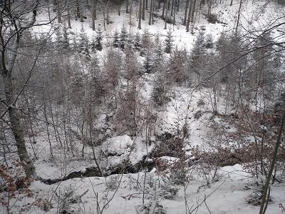 frische Waldluft im Winter